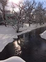 12/11(日)午前中の中島公園、鴨々川。雪も止み晴れ間が覗きました。